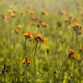 Summer Wildflowers by Diane Diederich