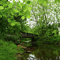 Summer Woodland And The Patapsco River Maryland by James Brunker