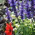 Summerflowers by Esther  Wilson