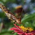 Summer's Sweet Nectar by Bonny Puckett