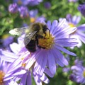 Summertime Bee by Cara Packer