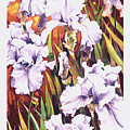 Summertime Irises by Mike Hill