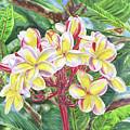 Summertime Kauai Island Plumeria Watercolor By Jenny Floravita by Jenny Floravita