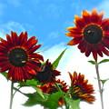 Summertime Memories by Gwyn Newcombe