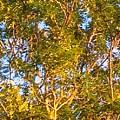 Summertime Tree by Debra Lynch