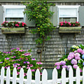 Summery Nantucket by Michelle Constantine
