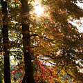 Sun And Autumn by Amanda Kiplinger