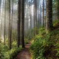 Sun Beams Along Hiking Trail In Washington State Park by David Gn