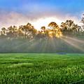 Sun Beams by Darwin White