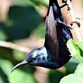 Sun Bird Acrobatics by SHWETA Sambyal