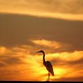 Sun Bird by Jack Norton