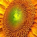 Sun Burst  by Ian  MacDonald