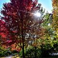 Sun Burst In Autumn by Maria Keady