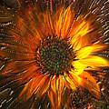 Sun Burst by Kevin Caudill