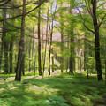 Sun Dappled Forest by John M Bailey