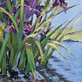 Sun Day - Iris In A Pond by L Diane Johnson