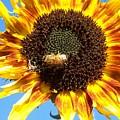 Sun Flower by Gene Ritchhart