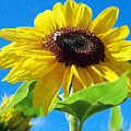 Sun Flower - Id 16235-142741-1520 by S Lurk