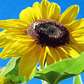 Sun Flower - Id 16235-142743-3974 by S Lurk