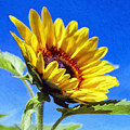 Sun Flower - Id 16235-142812-7136 by S Lurk