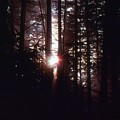 Sun In The Forest  by Lyle Crump
