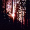 Sun In The Forest Two  by Lyle Crump