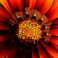 Sun In The Garden by JoAnn SkyWatcher