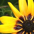 Sun Kist by Debbie May