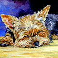Sun Light Snoozer - Yorkshire Terrier by Lyn Cook