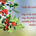 Sun Lite Pyrocanthia Berries Ps. 150 V 1 by Linda Phelps