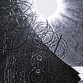 Sun Over Barbed Wire by Bill Cannon