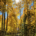 Sun Peaking Through The Aspens  by Saija Lehtonen