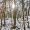 Sun Peaking Through The Trees - Fairmount Park by Bill Cannon