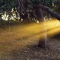 Sun Rays 2 by Jill Reger