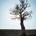Sun Rays And Bare Lonely Tree by Michalakis Ppalis