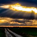 Sun Rays by Carol Ward
