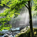 Sun Rays On Williams River  by Thomas R Fletcher