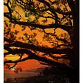 Sun Set At Rancho Palos Verdes, Cali by Jubi Art