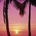 Sun Sets Between Pams by Carl Shaneff - Printscapes