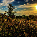 Sun Setting At Valley Forge by Howard Roberts