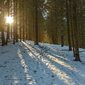 Sun Setting On Winter Woods by Norman Pogson