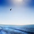 Sun Shade by Mal Bray