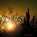 Sun Shining by L L Stewart