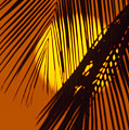 Sun Shining Through Palms by Ron Dahlquist - Printscapes