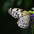 Sun Shining Through The Wings Of A Rice Paper Butterfly by DejaVu Designs