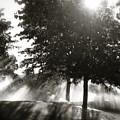 Sun Showers by Mark David Gerson