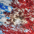 Sun Sky Clouds And A Red Maple by John Diebolt