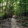 Sun Streaked Path  by Paul Kercher