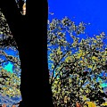 Sun Through Oak V3 by Scott L Holtslander