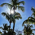 Sun Through Smathers Beach Palms by Bob Slitzan